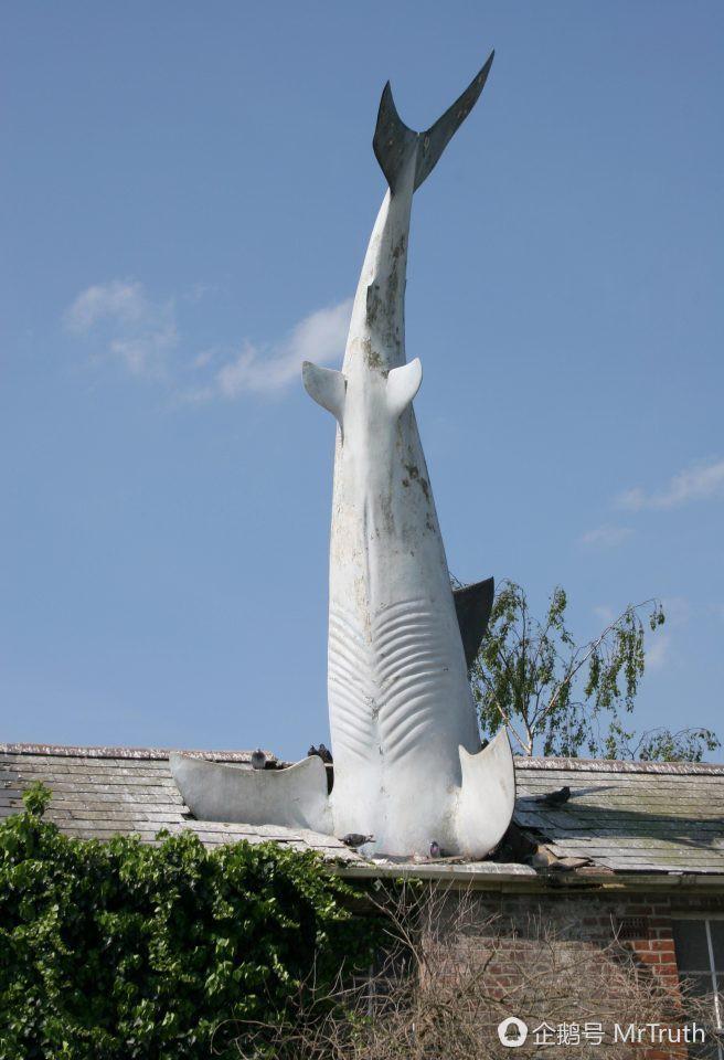 Phía sau hình ảnh cá mập cắm đầu xuống nóc nhà thu hút cư dân mạng 3