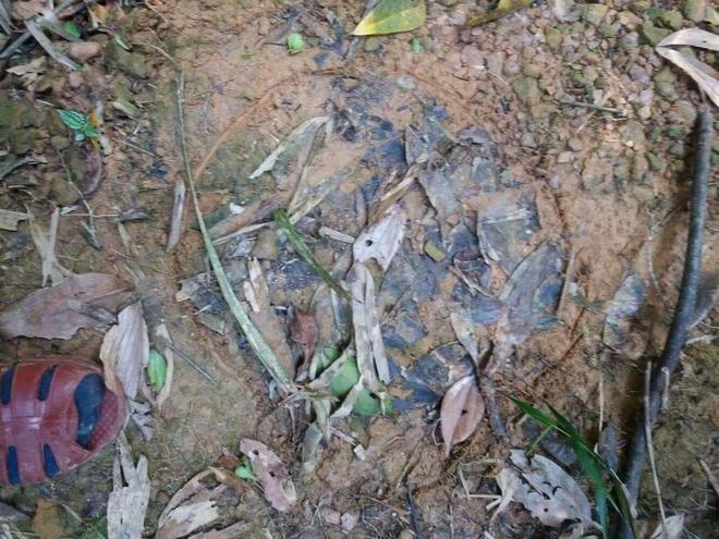 Người dân xôn xao phát hiện nhiều đàn voi rừng tại Vườn Quốc gia Vũ Quang 3