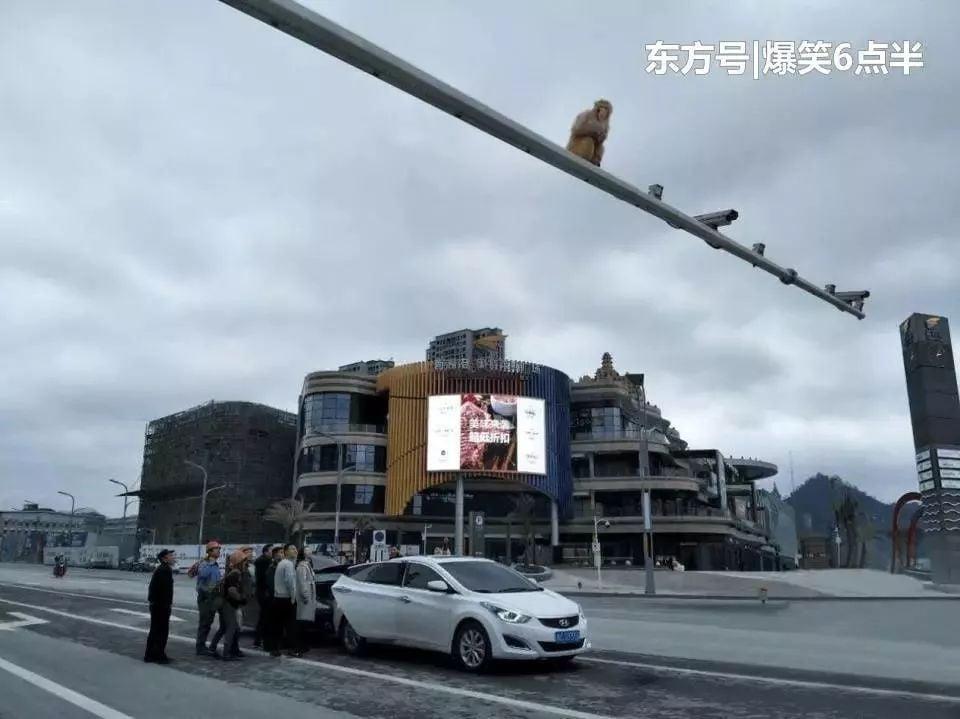 Hy hữu: Nhìn nhầm mông khỉ thành đèn đỏ, người phụ nữ gây ra vụ tai nạn  3