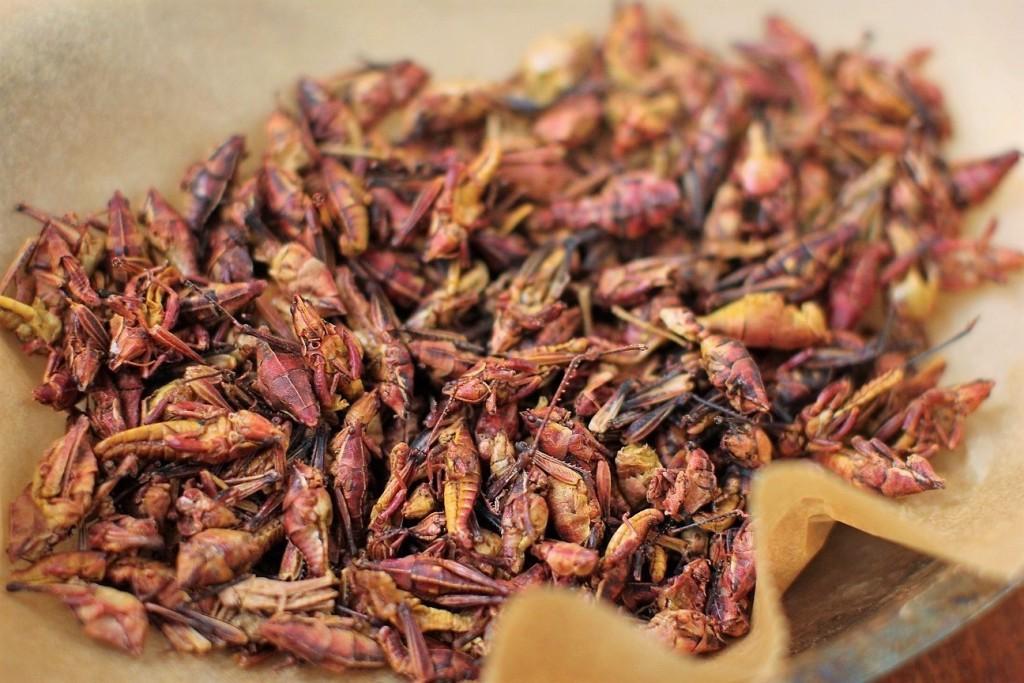 Những món ăn côn trùng kinh dị không phải ai cũng dám thử, đặc sản Việt Nam cũng góp mặt trong đó - Ảnh 2.