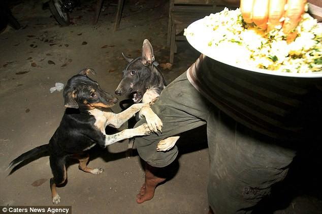 Hình ảnh rùng rợn trong những trang trại thịt chó: Nỗi đau của những chú chó phải chứng kiến cái chết của đồng loại 7