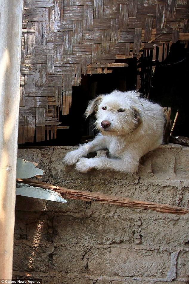 Hình ảnh rùng rợn trong những trang trại thịt chó: Nỗi đau của những chú chó phải chứng kiến cái chết của đồng loại 8