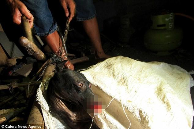 Hình ảnh rùng rợn trong những trang trại thịt chó: Nỗi đau của những chú chó phải chứng kiến cái chết của đồng loại 10