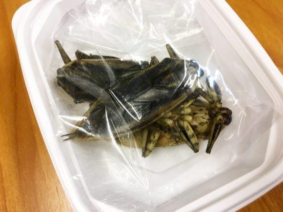 Có thứ kinh dị còn hơn cả tuyệt phẩm đồ ăn thiu thối, siêu mùi mang tên: Lẩu côn trùng! - Ảnh 5.