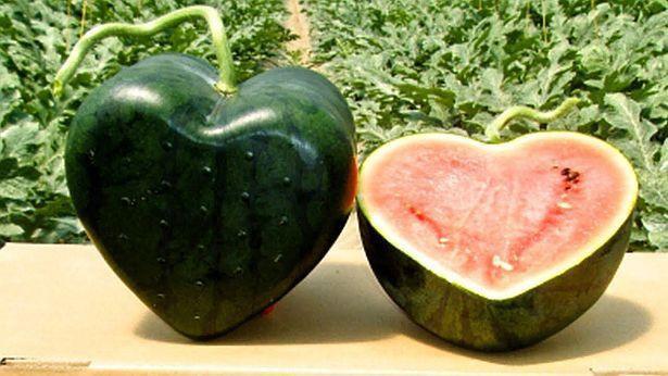 Vì sao một số loại trái cây Nhật Bản có mức giá siêu đắt? 6