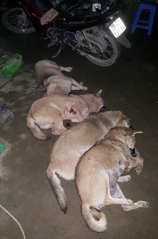 Bắt trộm gần 1 tạ chó bị người dân tóm gọn 1