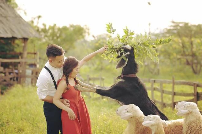 Tai nạn chụp ảnh cưới: Chú rể sững người nhìn dê xồm xông vào
