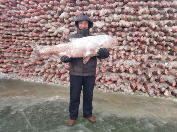 Độc đáo bức tường được xây bằng 2.000 con cá giữa hồ băng  3