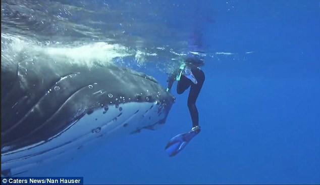 Thấy cá mập săn mồi lởn vởn, cá voi khổng lồ nặng 22 tấn lấy thân mình che chắn cho đội thợ lặn khỏi bị tấn công - Ảnh 2.