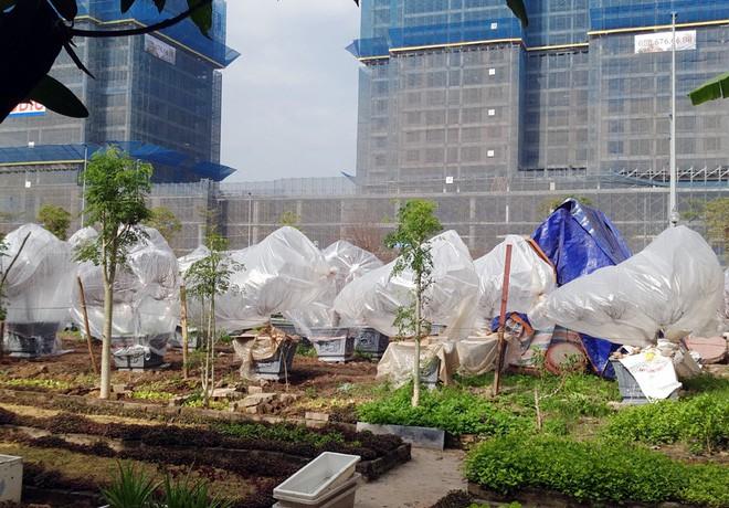 Hà Nội: Người dân lắp điều hòa, bật quạt sưởi, bọc nilon chống rét cho đào Tết 12