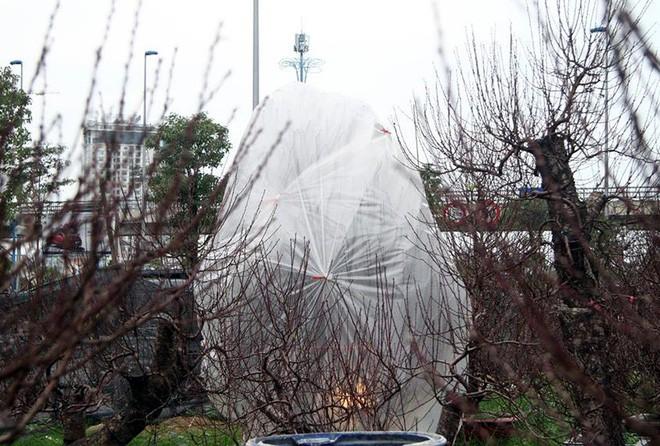 Hà Nội: Người dân lắp điều hòa, bật quạt sưởi, bọc nilon chống rét cho đào Tết 8