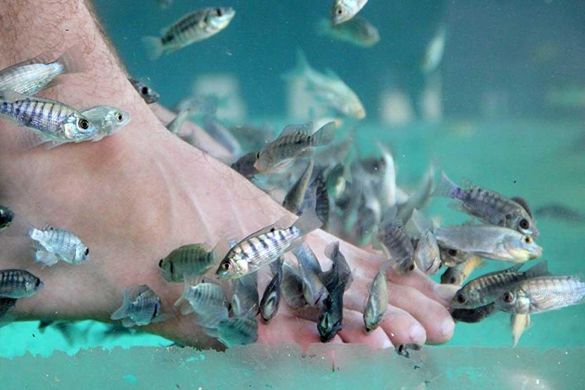 Hình ảnh 10 năm không rửa chân, chàng kỹ sư khiến cá của tiệm spa chết hàng loạt số 1