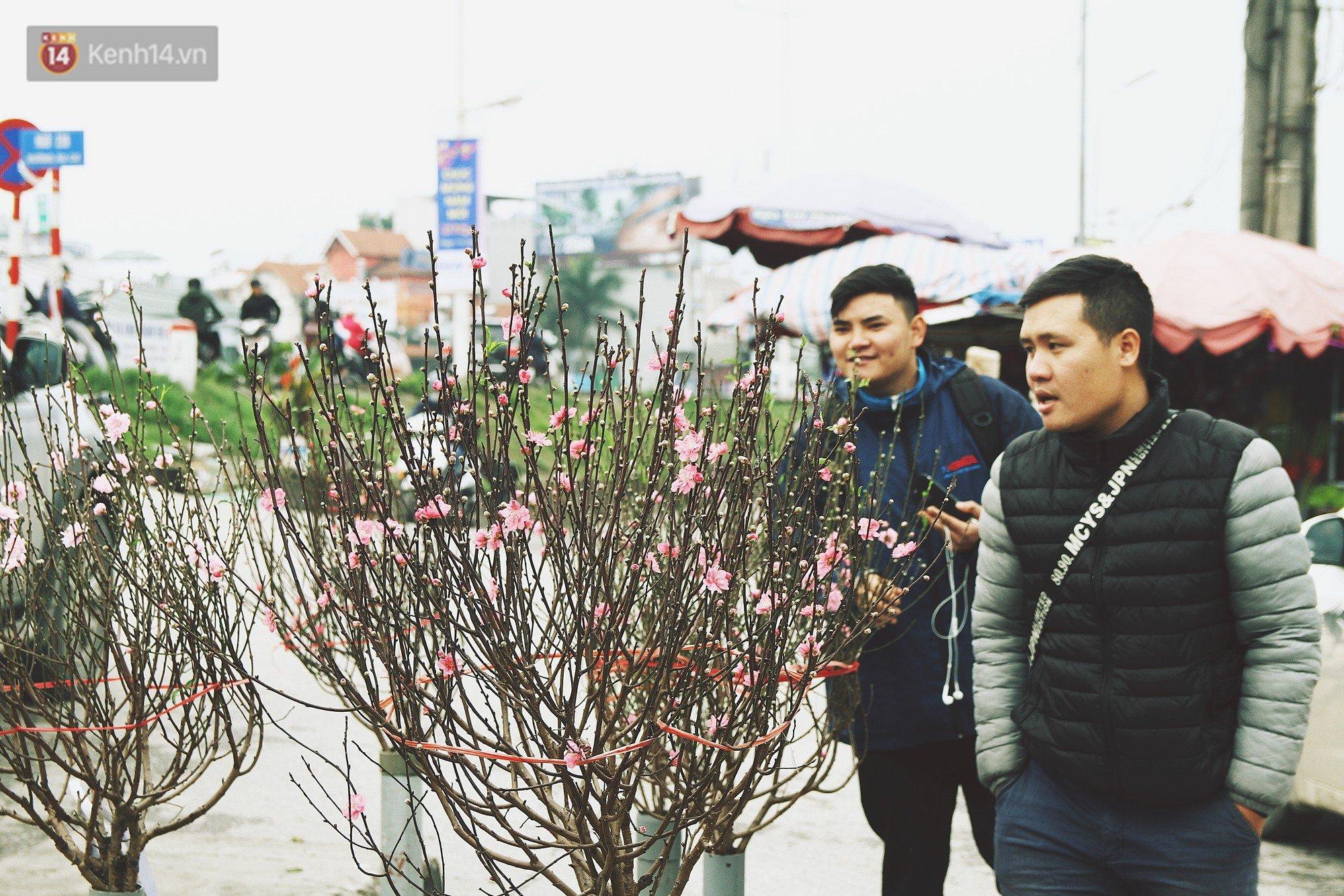 Người dân làng đào Nhật Tân: Từ giờ đến Tết mà rét thế này thì đào không nở hoa kịp mất! - Ảnh 9.