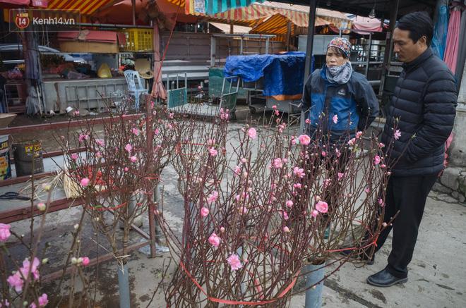 Hình ảnh Người dân làng đào Nhật Tân: Từ giờ đến Tết mà rét thế này thì đào không nở hoa kịp mất! số 7