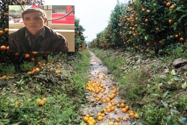 Hình ảnh Bắt giữ đối tượng dùng thuốc diệt cỏ phá hoại 400 cây quất cảnh của người dân số 1