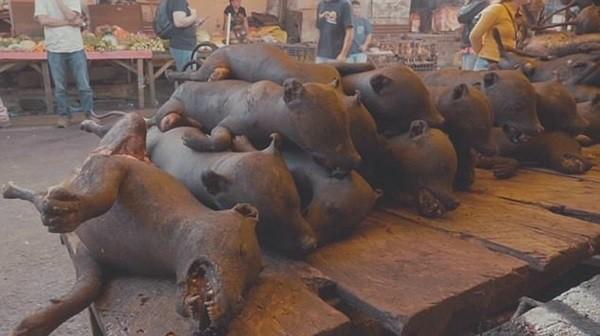 Thảm cảnh hàng nghìn chú chó bị giết thịt dã man, thui chín bằng súng phun lửa 3