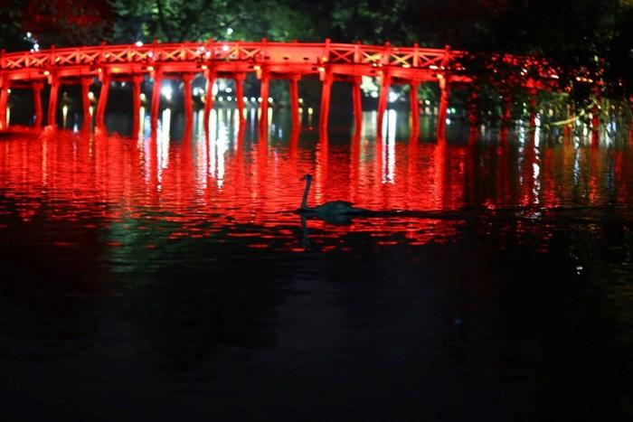 12 con Thiên nga ở hồ Gươm đã bị bắt lại giữa đêm 1