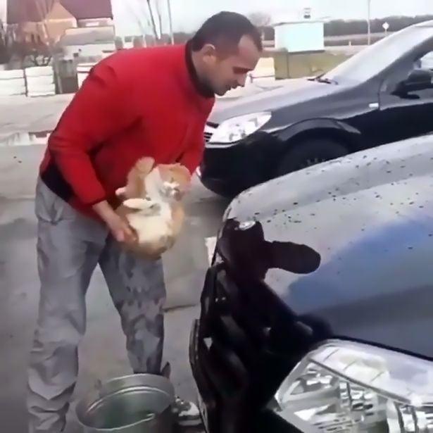 Phát hiện chú mèo nằm ngủ dưới xe, thanh niên gây phẫn nộ khi đem mèo nhúng nước, làm giẻ lau chiếc Mercedes 1