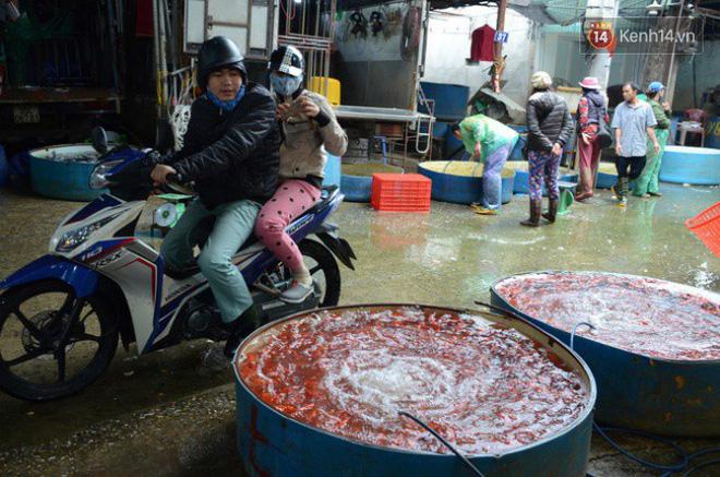 Chợ cá lớn nhất Hà Nội nhộn nhịp trước giờ ông công ông táo về chầu trời 3