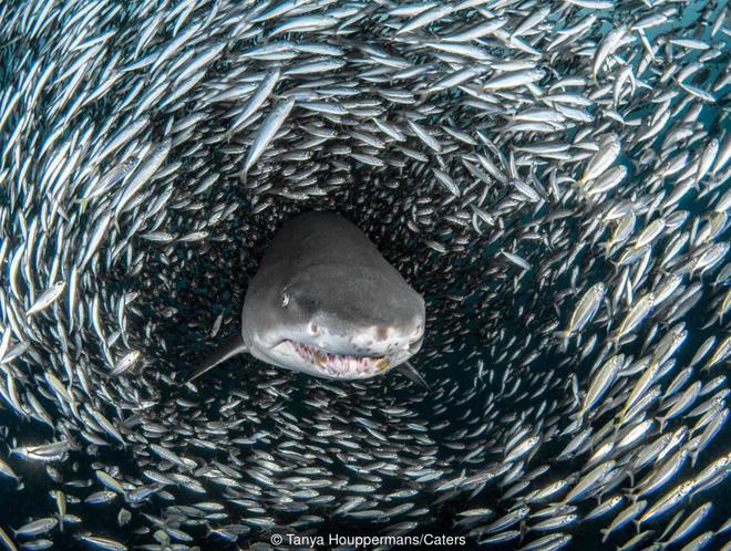 Tại sao cá mập luôn là nỗi khiếp sợ, dù chúng ta giết tới hàng triệu con mỗi năm? 4