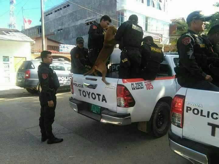 Sự thật đằng sau bức ảnh chú chó nghèo bán rau bị cảnh sát bắt