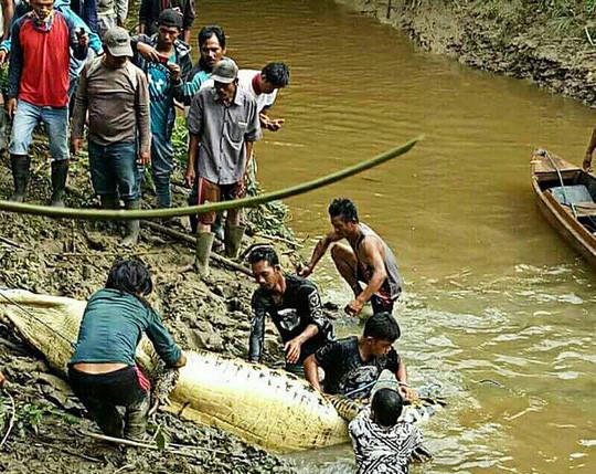 Hình ảnh Người dân mổ bụng cá sấu dài 6 mét, kinh hãi phát hiện tay chân người bên trong số 1