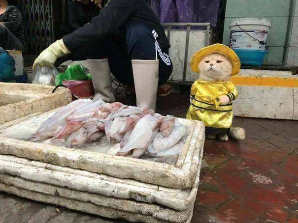 Hết bán cá lại trông phản thịt, chú mèo nổi tiếng khắp chợ Hải Phòng lên trang nhất tạp chí nước ngoài 1