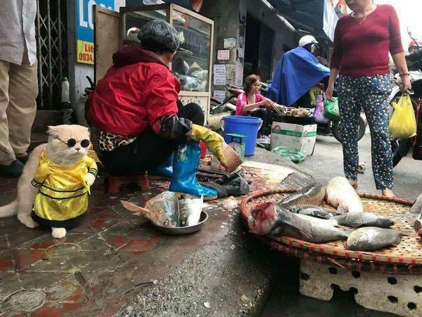 Hết bán cá lại trông phản thịt, chú mèo nổi tiếng khắp chợ Hải Phòng lên trang nhất tạp chí nước ngoài 2