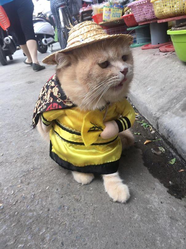 Hết bán cá lại trông phản thịt, chú mèo nổi tiếng khắp chợ Hải Phòng lên trang nhất tạp chí nước ngoài 7