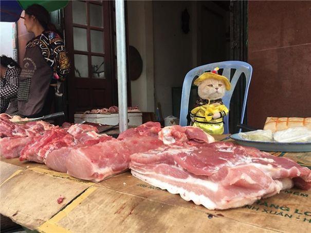 Hết bán cá lại trông phản thịt, chú mèo nổi tiếng khắp chợ Hải Phòng lên trang nhất tạp chí nước ngoài 8