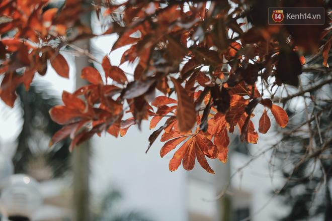 Bách Khoa, Sư Phạm mùa cây thay lá, đẹp dịu dàng như thu ở trời Âu - Ảnh 1.