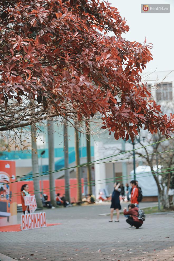 Bách Khoa, Sư Phạm mùa cây thay lá, đẹp dịu dàng như thu ở trời Âu - Ảnh 2.