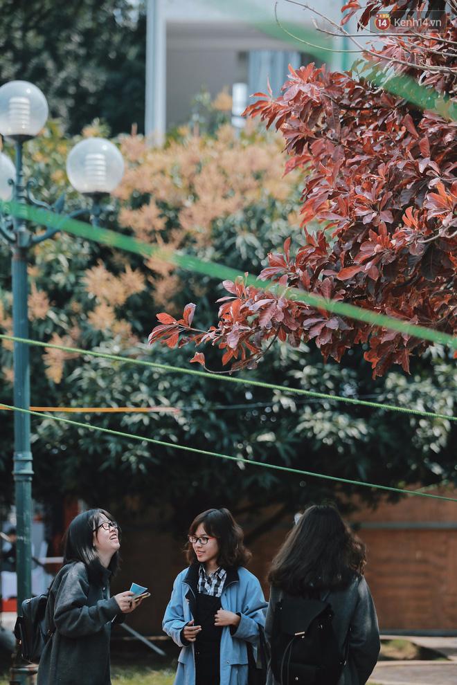 Hình ảnh Bách Khoa, Sư Phạm mùa cây thay lá, đẹp dịu dàng như thu ở trời Âu số 9