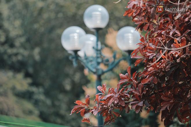 Hình ảnh Bách Khoa, Sư Phạm mùa cây thay lá, đẹp dịu dàng như thu ở trời Âu số 10