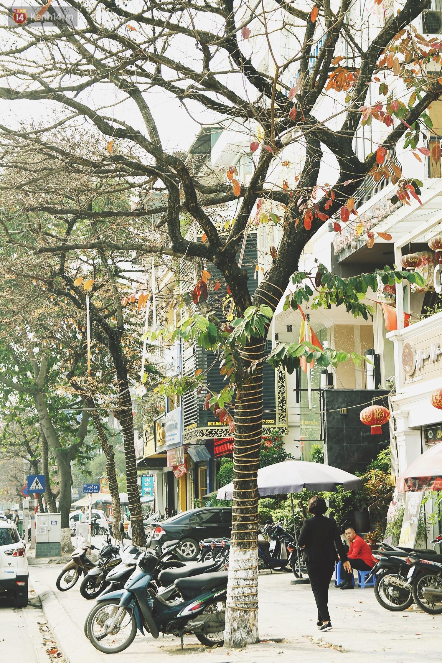 Trong nhiều năm qua, người dân Hà Nội đã đối xử với những hàng cây xanh như thế nào? - Ảnh 3.
