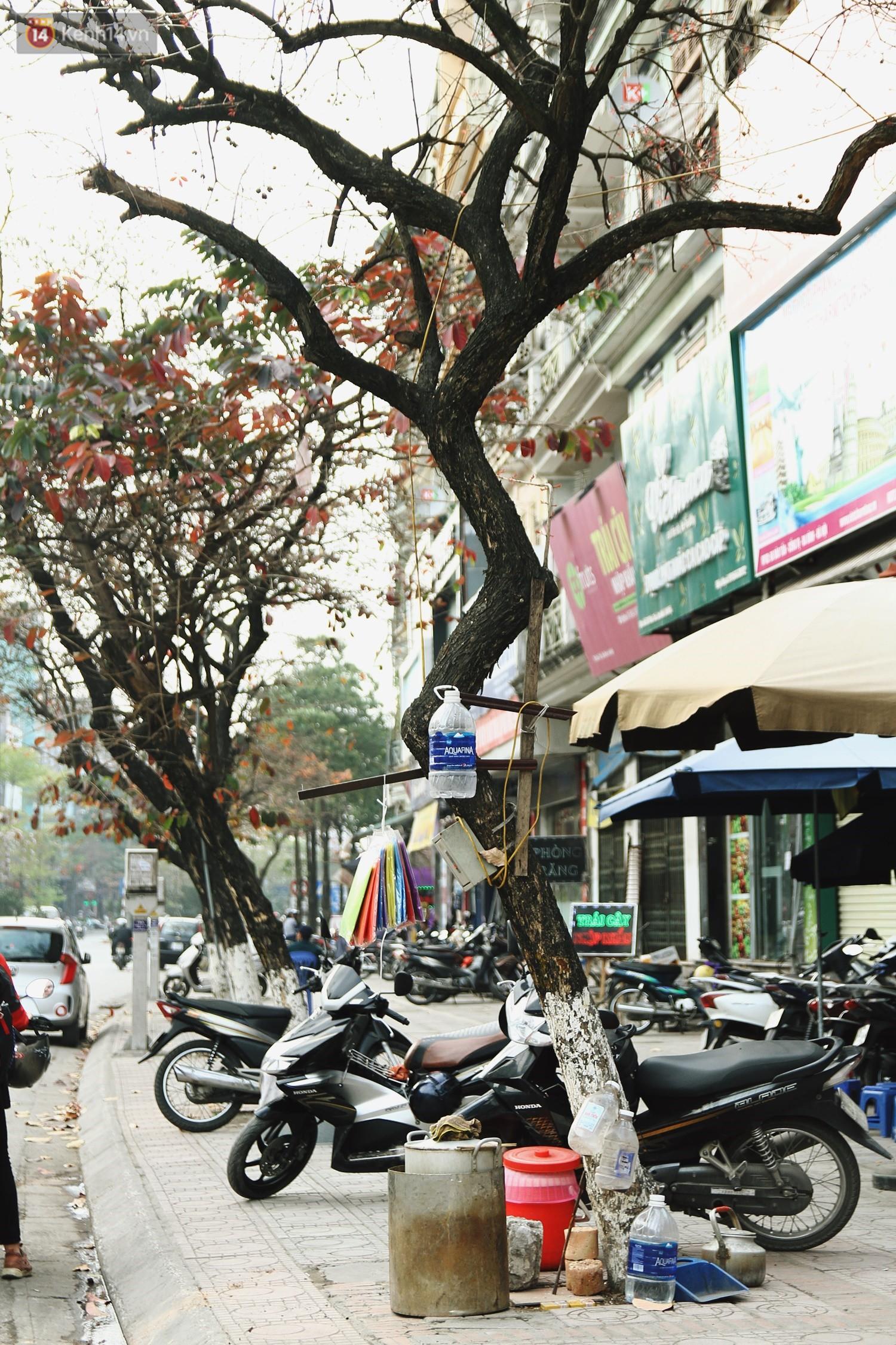 Trong nhiều năm qua, người dân Hà Nội đã đối xử với những hàng cây xanh như thế nào? - Ảnh 7.