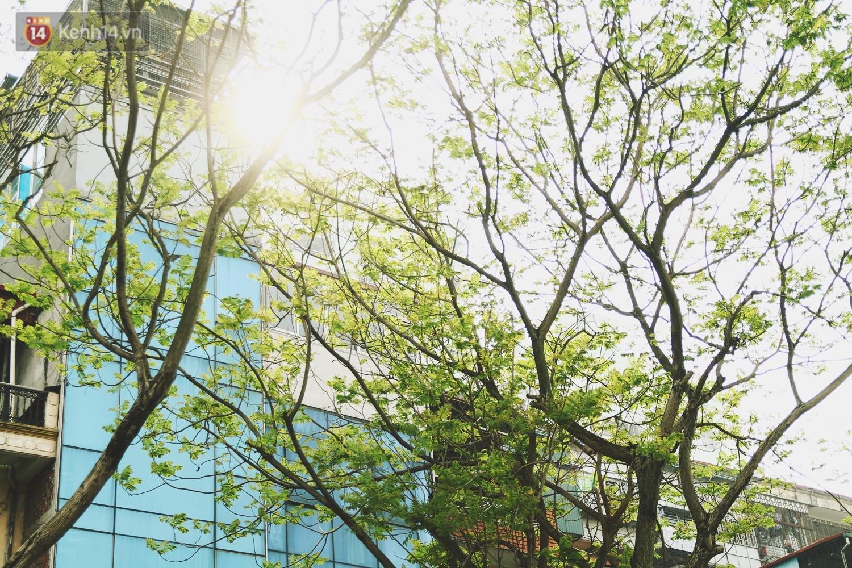 Trong nhiều năm qua, người dân Hà Nội đã đối xử với những hàng cây xanh như thế nào? - Ảnh 2.