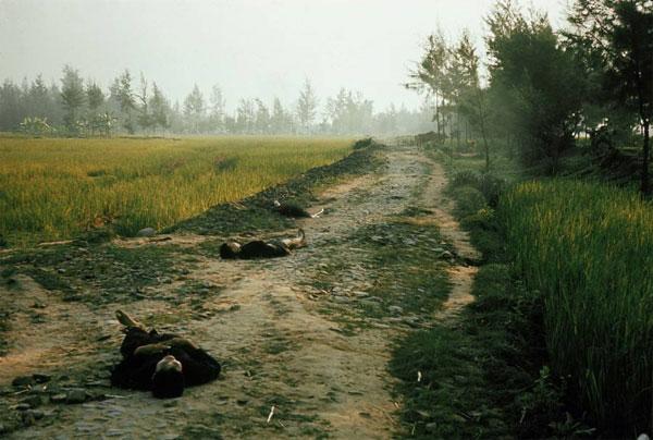 50 năm thảm sát Mỹ Lai: Quá nhiều đau đớn và ám ảnh trong những bức hình 13