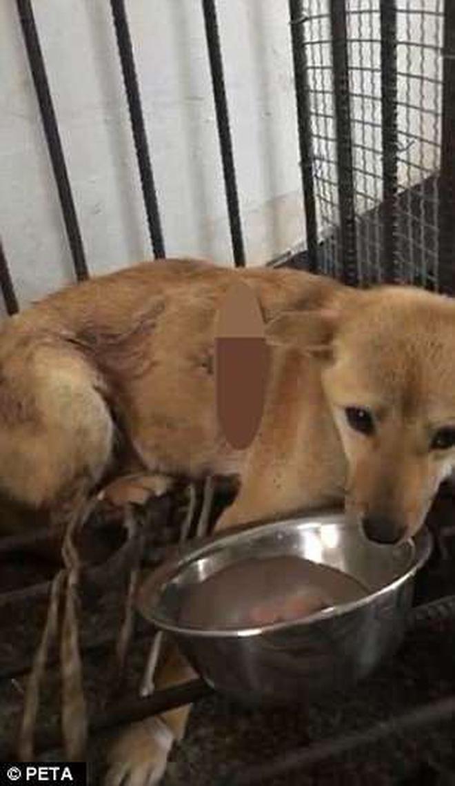 Trung Quốc: Dùng chó hoang để thực hành mổ xong, sinh viên Y đem vứt luôn ra vườn trường dù con vật còn thoi thóp sống 3