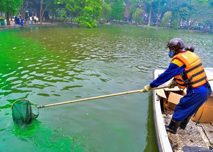 Hồ Gươm xuất hiện váng nước lạ, nghi bị tảo độc 'xâm chiếm' 3