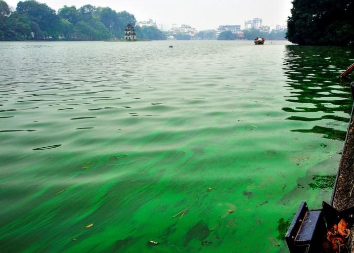 Hồ Gươm xuất hiện váng nước lạ, nghi bị tảo độc 'xâm chiếm' 1