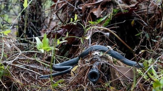 Bức ảnh con rắn bò qua họng súng lính bắn tỉa gây sốt bất ngờ 1