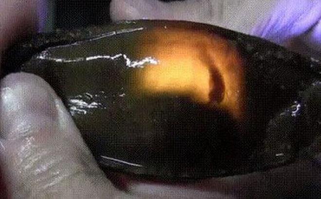 """Đây là trứng cá mập: Nhìn giống nòng nọc mà có """"lòng đào"""" giống trứng gà đến lạ 1"""