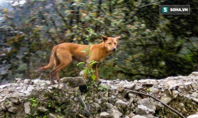 Phát hiện loài chó nguyên thủy ở đỉnh núi hẻo lánh nhất thế giới! 1