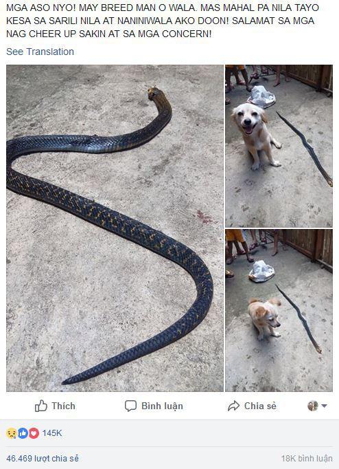 Cô chó dũng cảm cắn chết rắn hổ mang để cứu chủ, nở nụ cười trước khi hi sinh khiến ai cũng phải xúc động 4