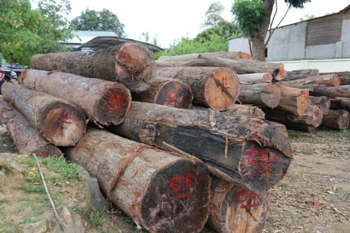 Khám xét khẩn cấp nhà riêng trùm gỗ lậu Phượng
