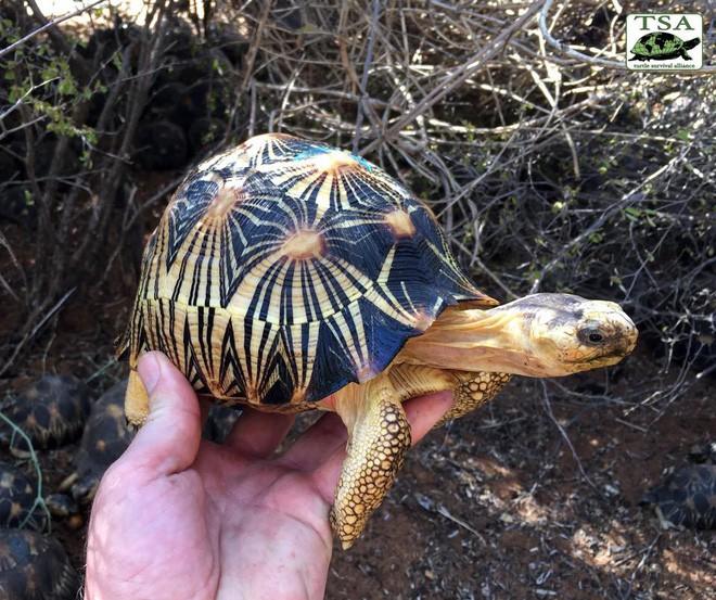 Phát hiện ra hơn 10.000 cá thể rùa cạn bị nhốt trong nhà của thợ săn, có lẽ đã không phát hiện được ra nếu mùi hôi thối không lan rộng ra toàn bộ khu vực 1