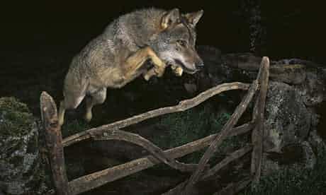 Đây là tấm hình suýt đạt giải nhất cuộc thi ảnh thiên nhiên, nếu như không bị lộ ra điều này 3