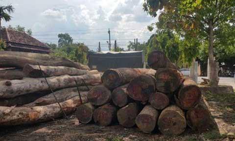 Vụ gỗ lậu ở Đắk Nông: Bắt đàn em thân tín của trùm Phượng 'râu' 2