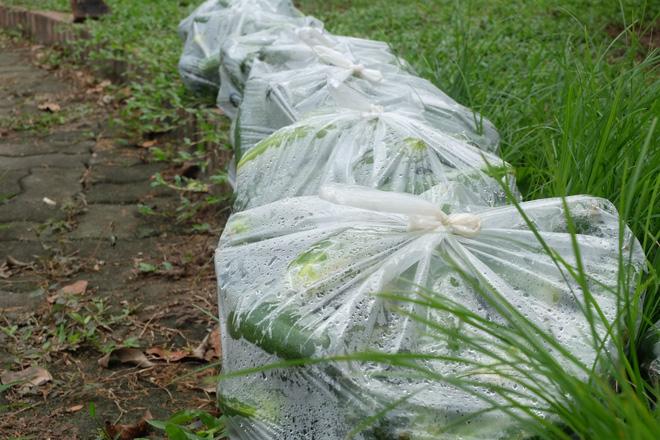 Hàng trăm kg dưa chuột đổ mồ hôi trong nắng nóng Hà Nội chờ được giải cứu - Ảnh 5.